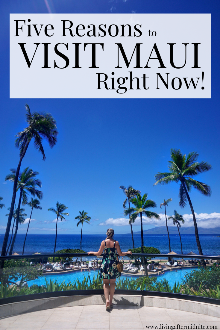 Five Fantastic Reasons to Visit Maui Right Now