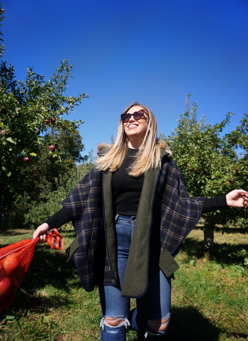 The Best Apple Orchards Close to New York City